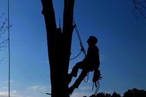tree-service-1059484_960_720